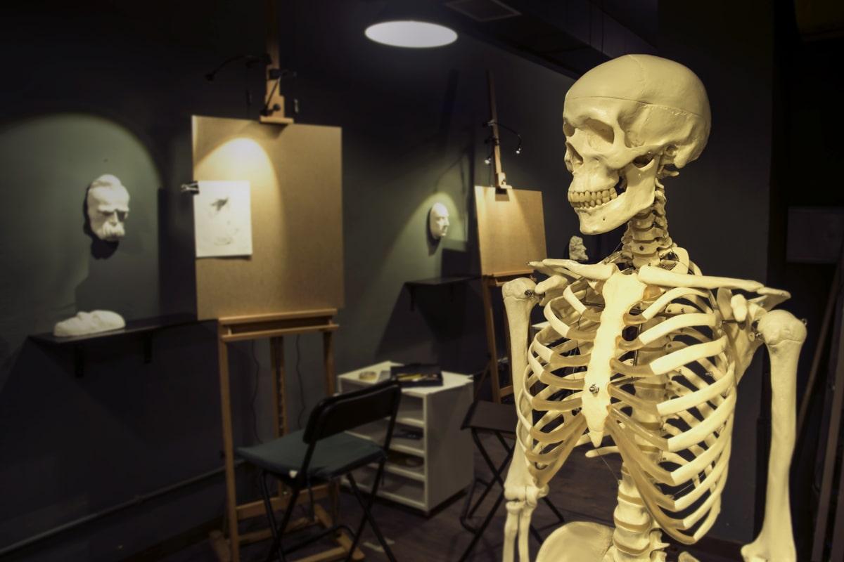Bodegones y esqueleto. Academia de Pintura y Dibujo Estudio Nigredo. Calle Granada 11 Madrid