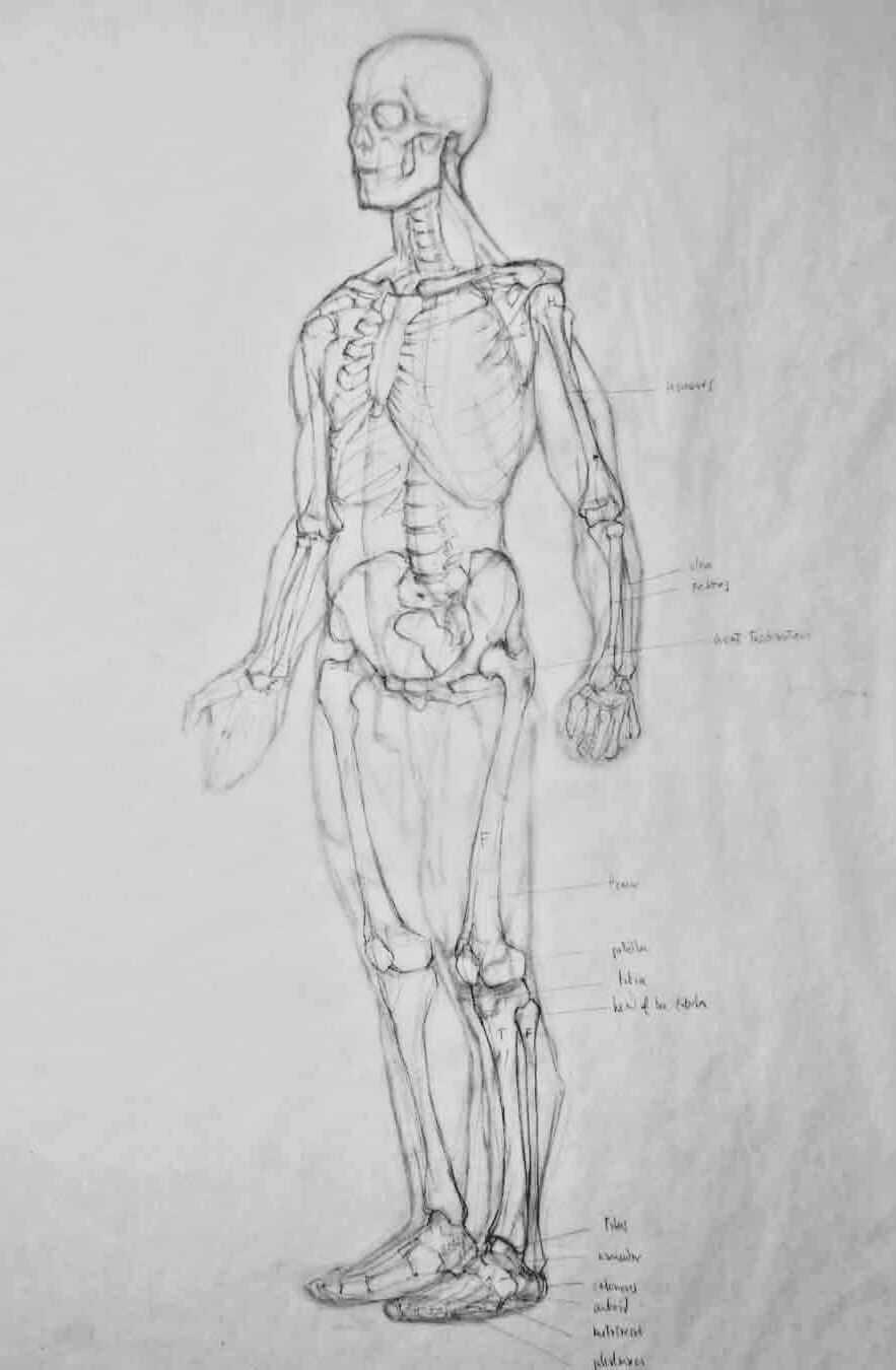 Dibujo Anatómico. Diego Catalán. Estudio Nigredo - Academia de Pintura y Dibujo